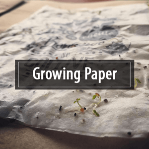 Growing Paper : carte de visite zéro déchet
