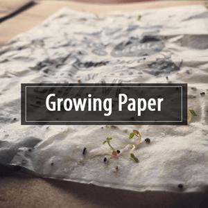 Growing Paper : carte de visite zéro déchet