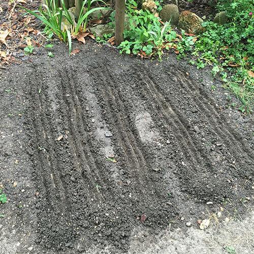 Tranchée pour semer les graines du potager