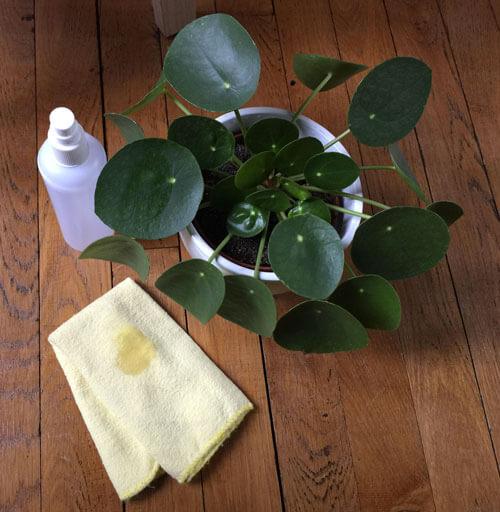 Nettoyer plantes naturellement