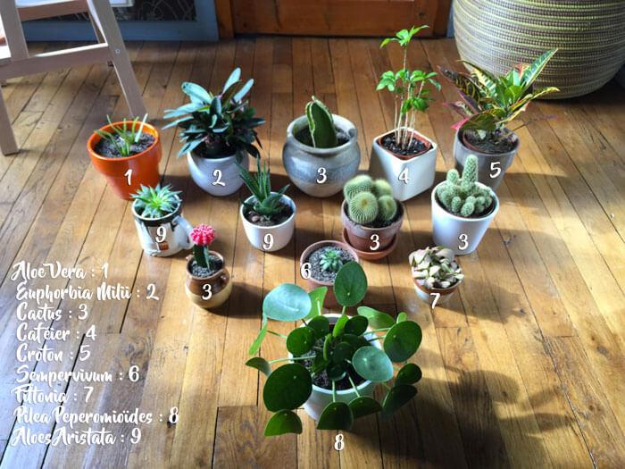Entretenir les plantes d'intérieur