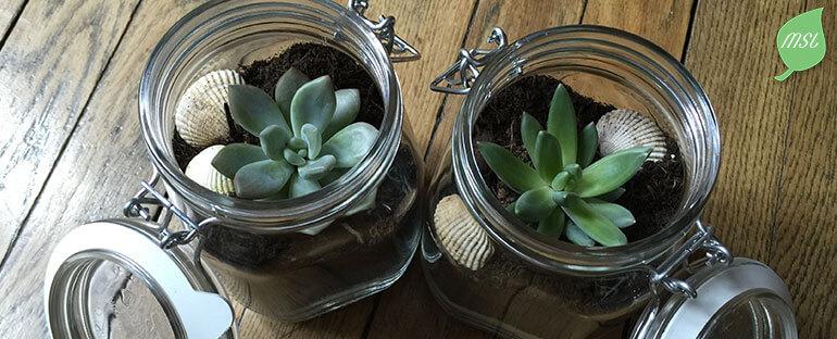 DIY réaliser un terrarium avec un bocal et une plante grasse