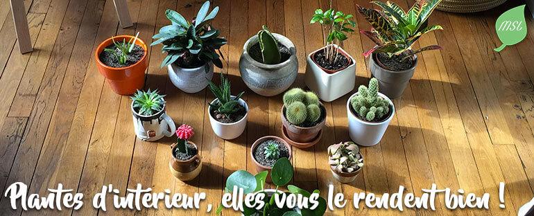 Cultiver des plantes d'intérieur