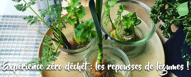 Expériences zéro déchet : faire repousser des légumes